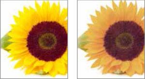 barwa światła: z lewej Ra 100 a z prawej mniej niż Ra 80